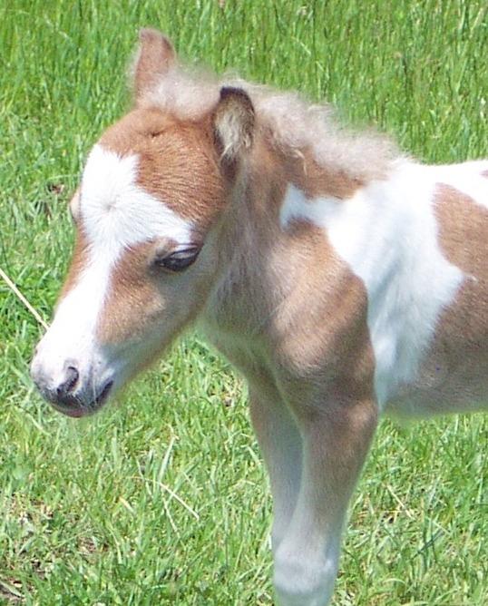 external image Foal_Button2013.jpg